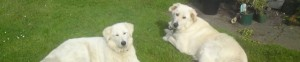 cropped-jasper-and-nellie-3-27-10-11