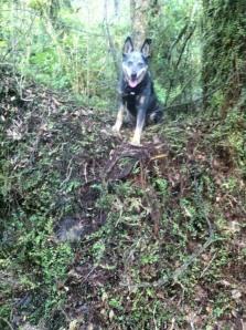 I is a tree climbing dog.