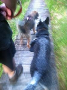 No walking string fur me. Unlike dat Izzy.