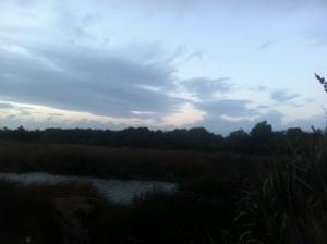 ....  and by da lagoon